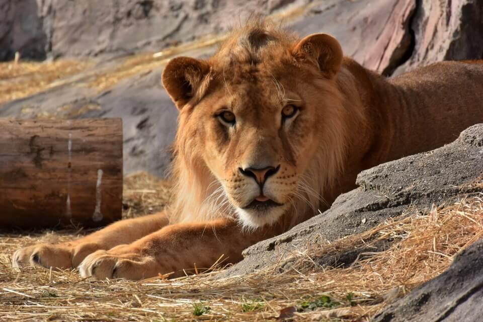 東山動物園の写真