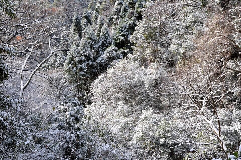猿投山の雪写真