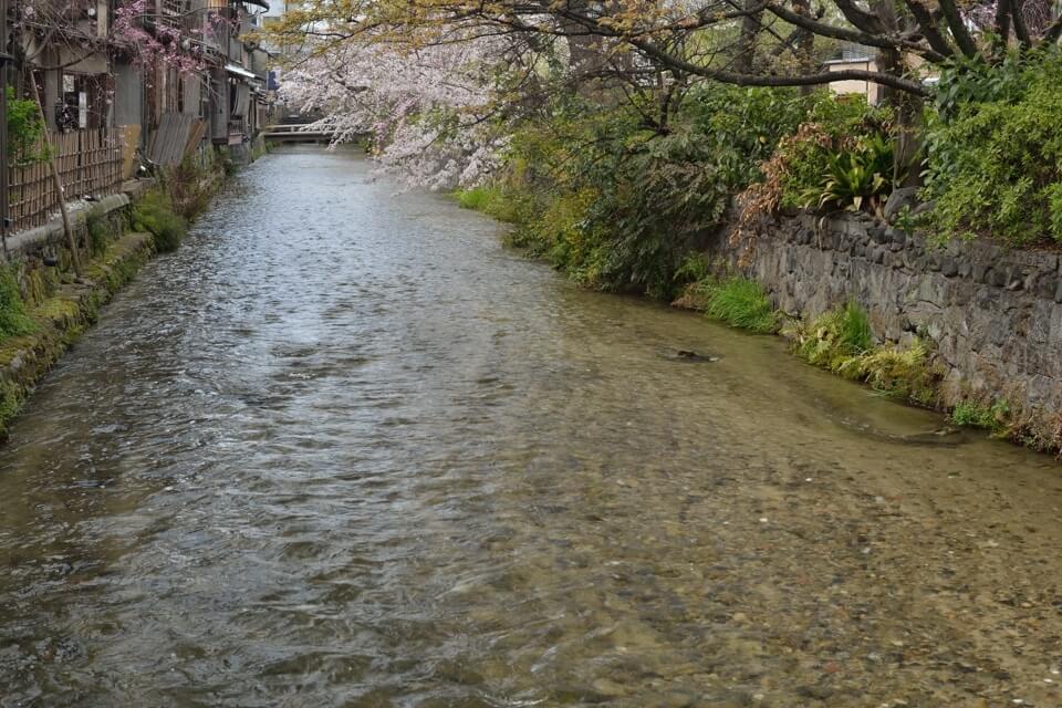 祇園白川の桜写真