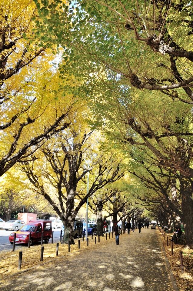 神宮前イチョウ並木写真