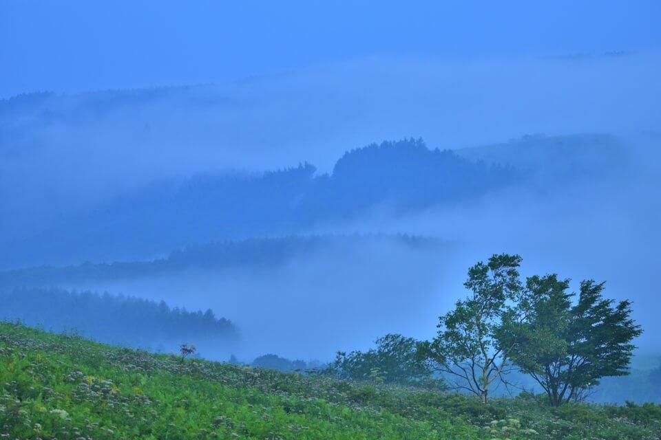 霧が峰高原の写真