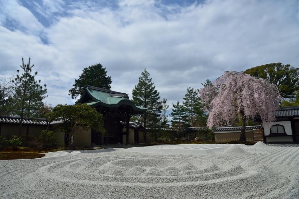高台寺「ねねの枝垂れ桜」の写真