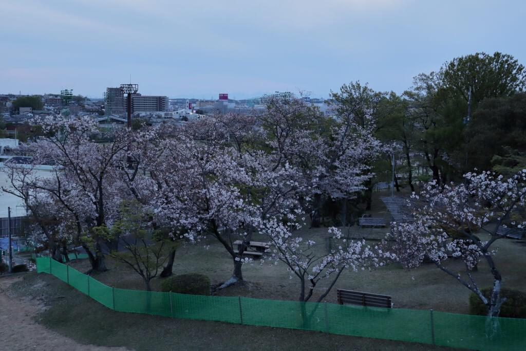 三好池の桜名所写真