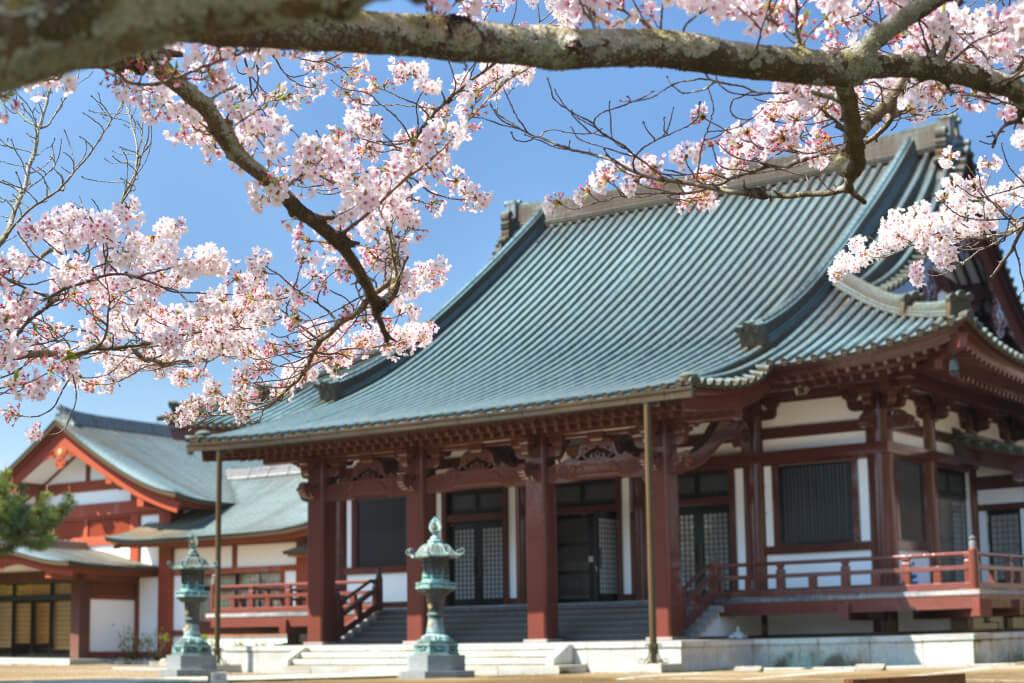 五色園の桜写真