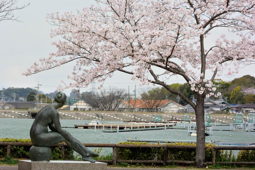 保田ヶ池公園の桜写真