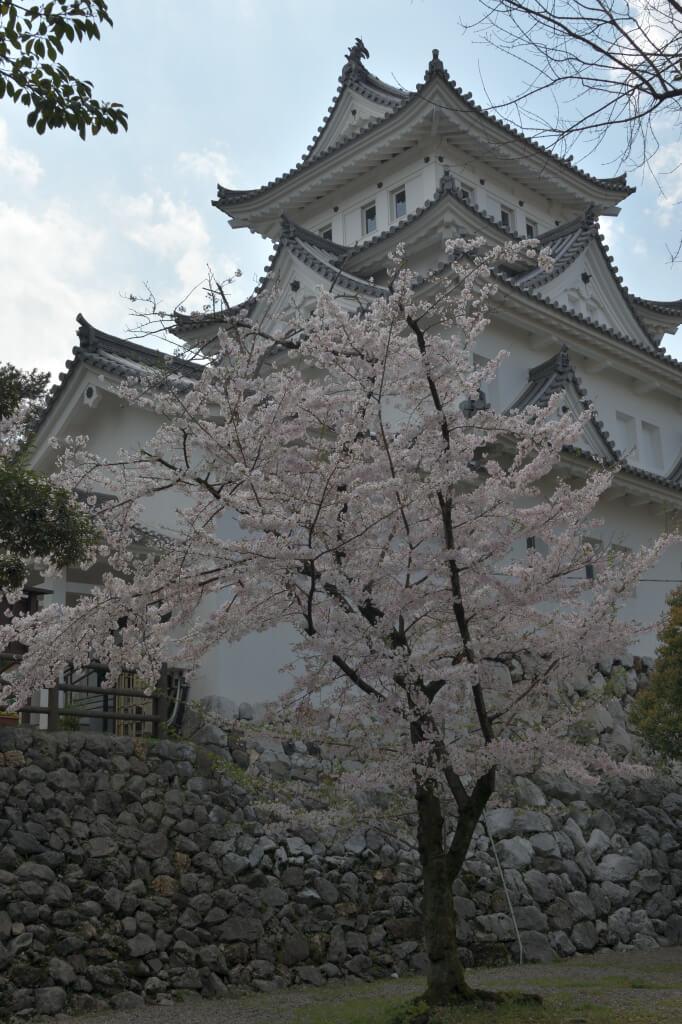 大垣城の桜写真