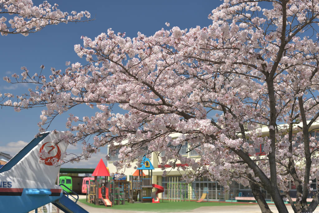 愛知東郷ららぽーと桜写真
