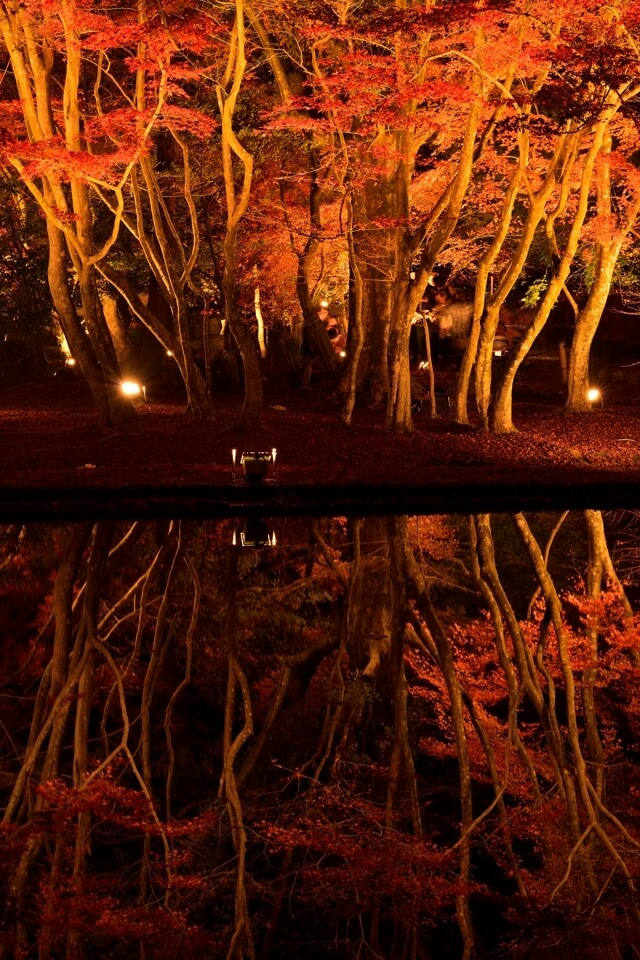 曽木公園の紅葉ライトアップ夜景写真