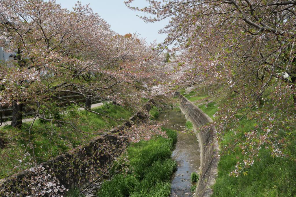 水無瀬川緑地ランニング
