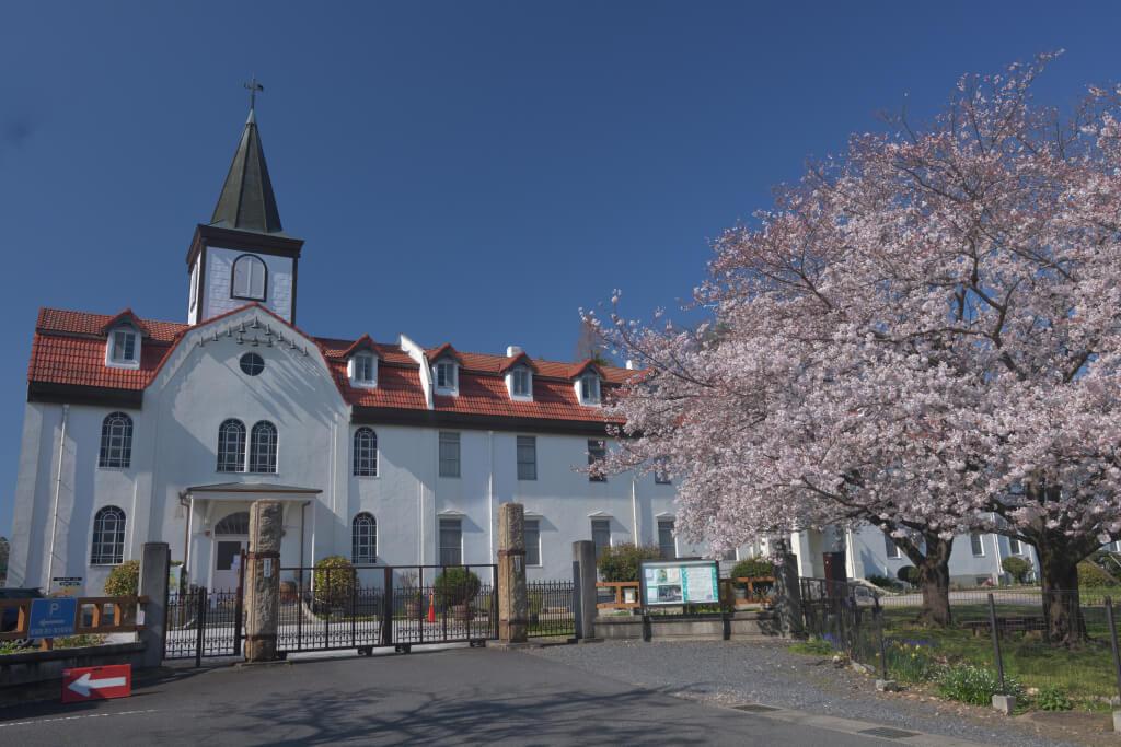 多治見修道院の桜写真