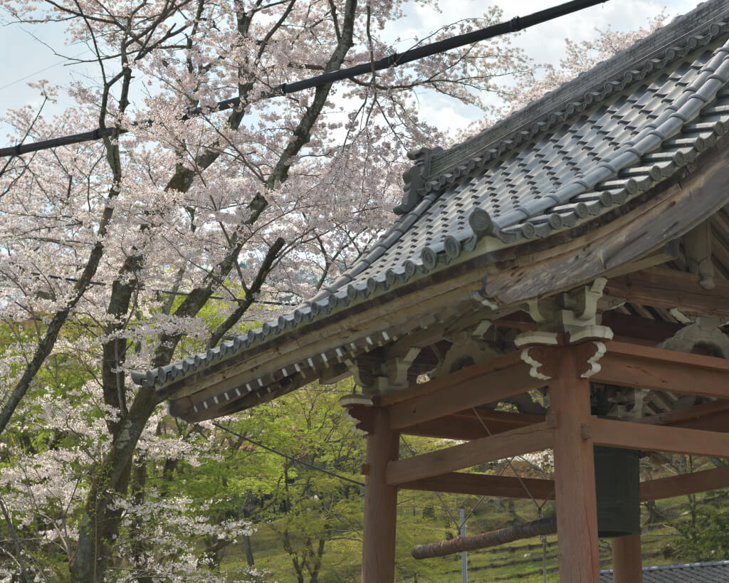霞間ヶ渓公園の桜写真
