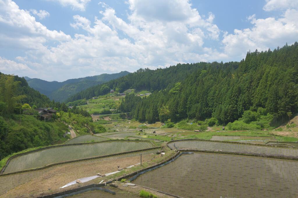 四谷の千枚田写真