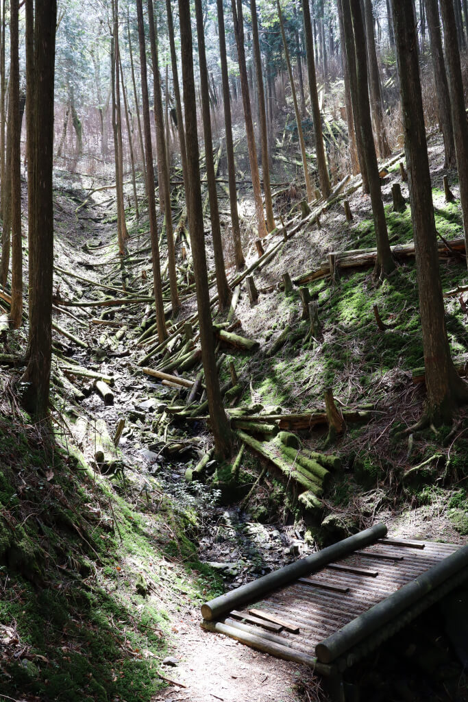 寧比曽岳トレイルラン写真