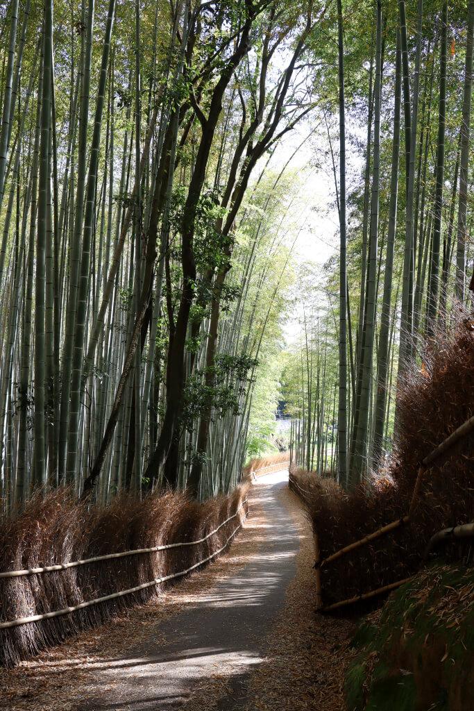 嵐山竹林の小径写真