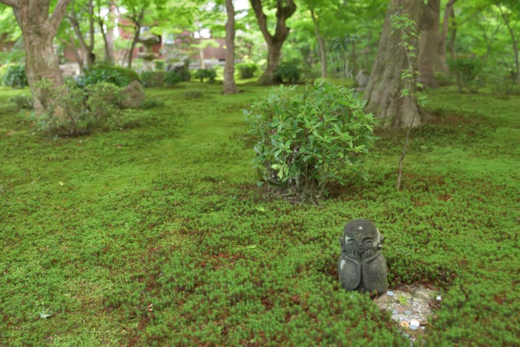 圓光寺の青もみじ写真