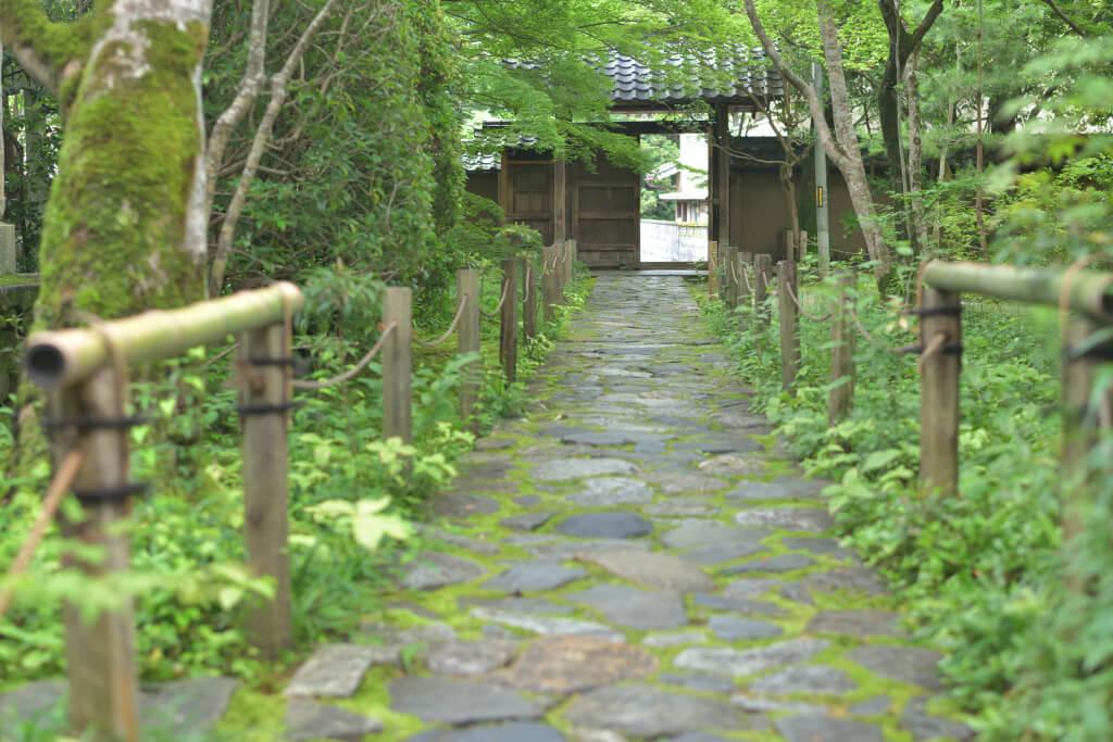 蓮華寺青もみじ写真京都