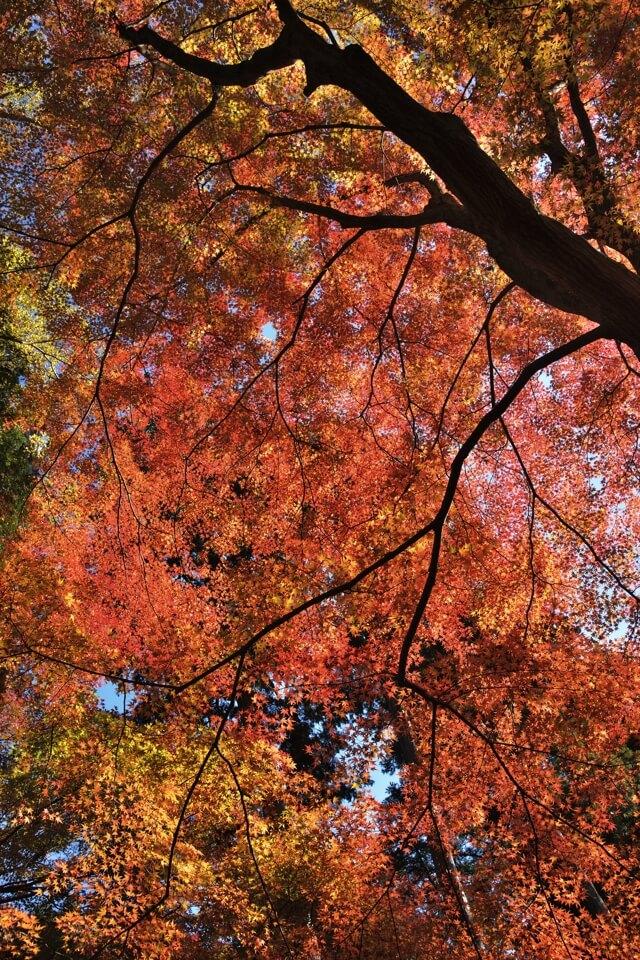 雲興寺の紅葉写真1