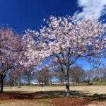 春の3ピース
