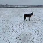 雪は撮影チャンス!