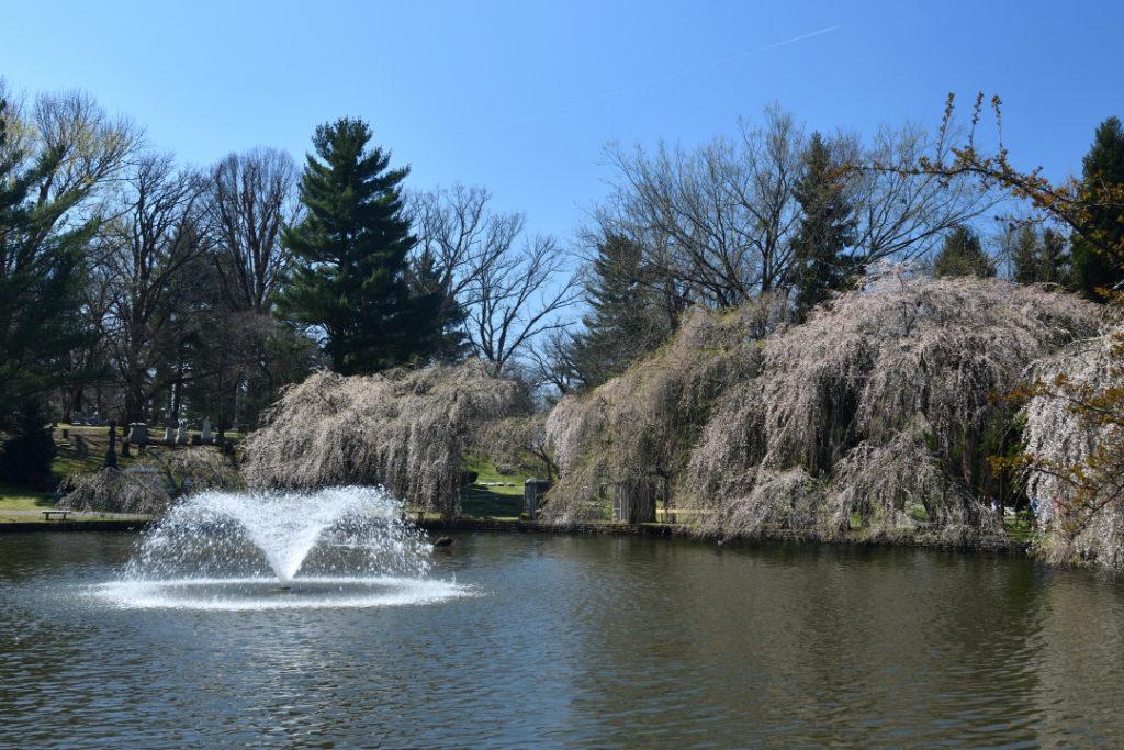 桜の名所レキシントン墓地