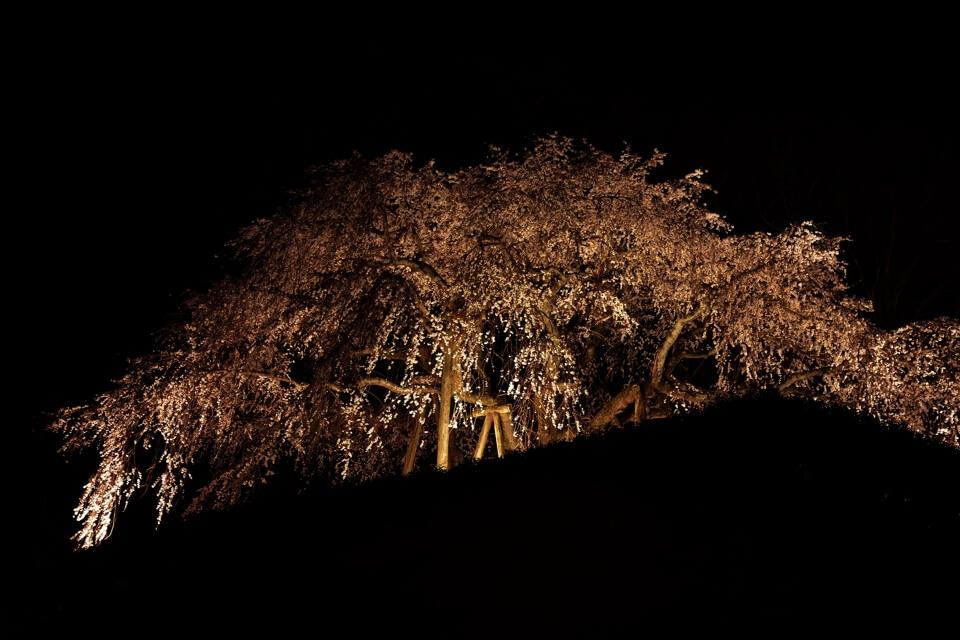 奥山田の夜桜写真