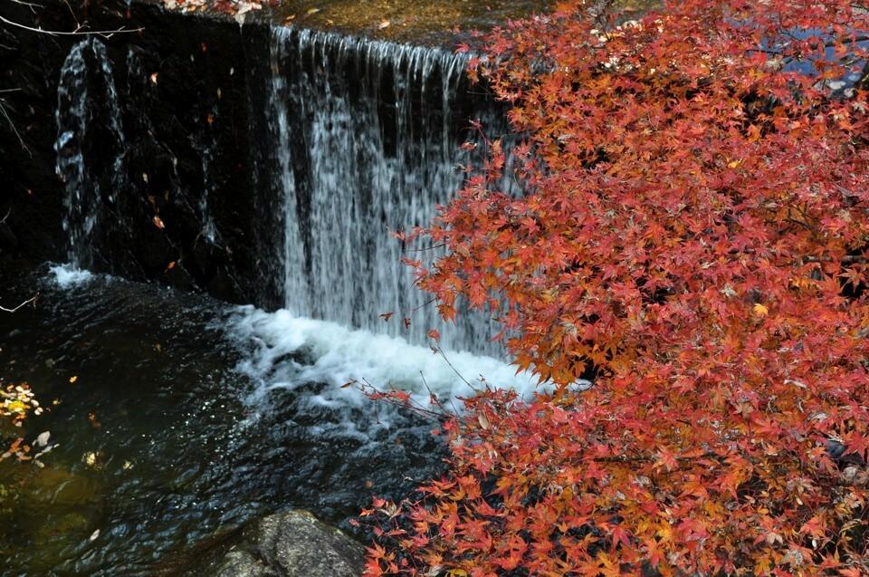 岩屋堂の紅葉写真