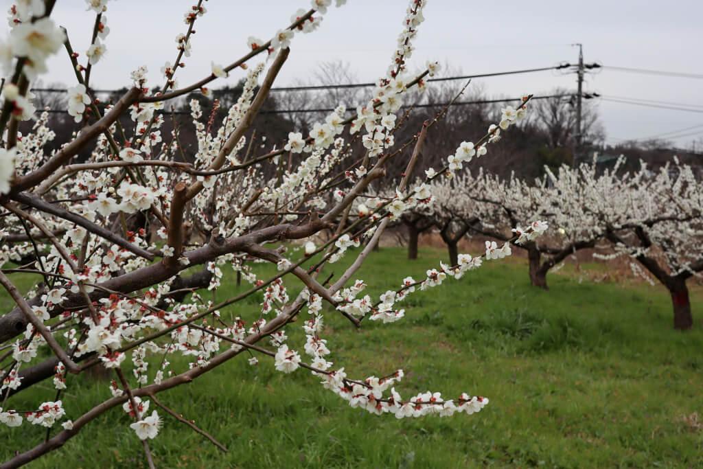 三好池ランニングと花粉と春の花々