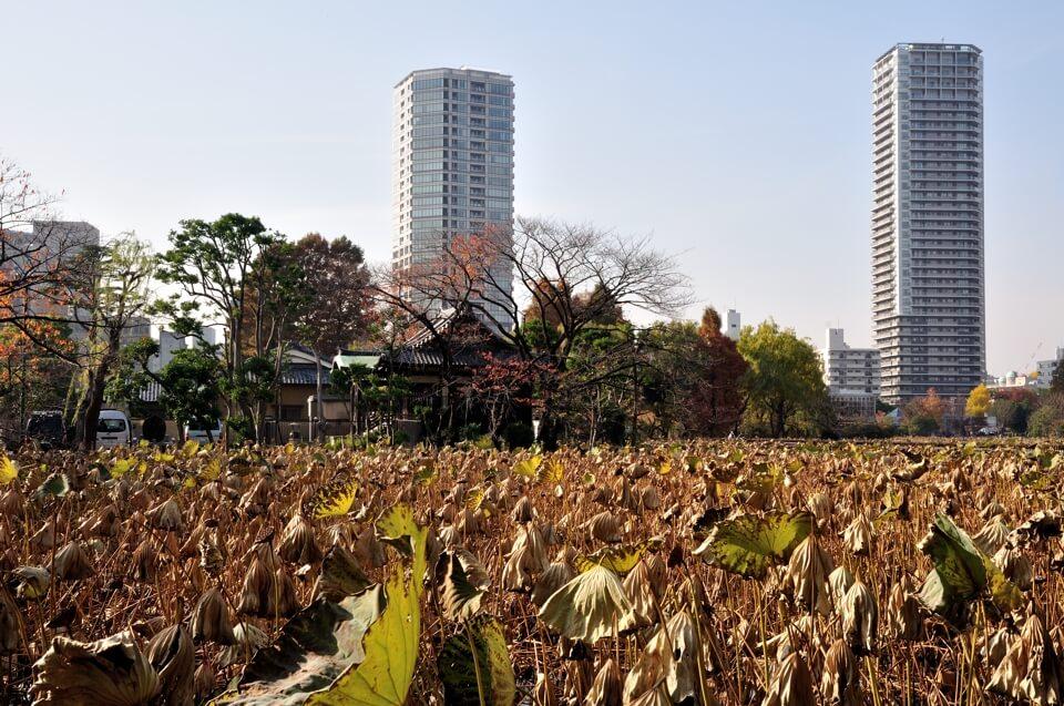 上野公園・東京国立博物館の写真