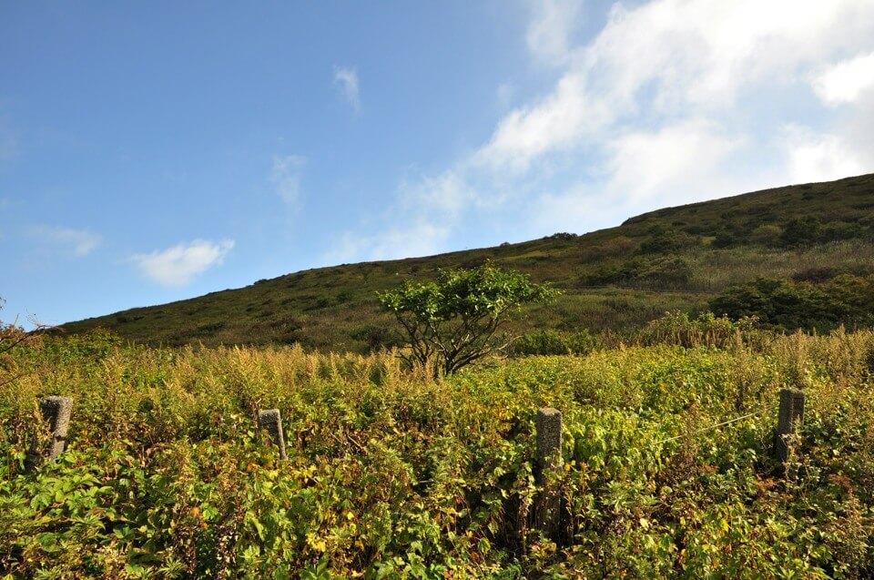 伊吹山ドライブウェイ山頂の写真