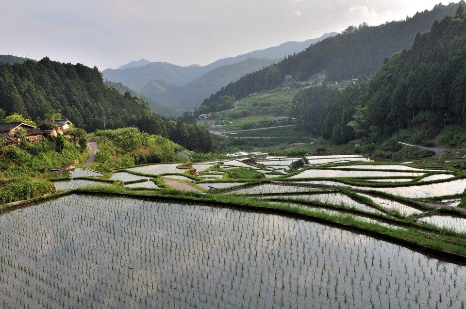 四谷千枚田の棚田写真