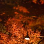 大覚寺・紅葉ライトアップ写真