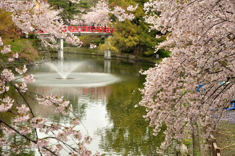 岡崎城は桜の写真名所、一眼レフ写真撮影スポット