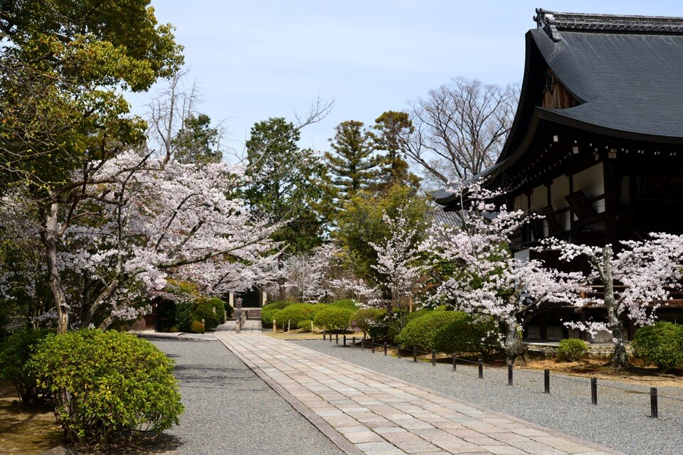 広隆寺の桜写真