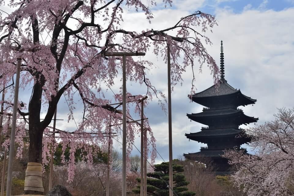 東寺・五重塔の桜写真