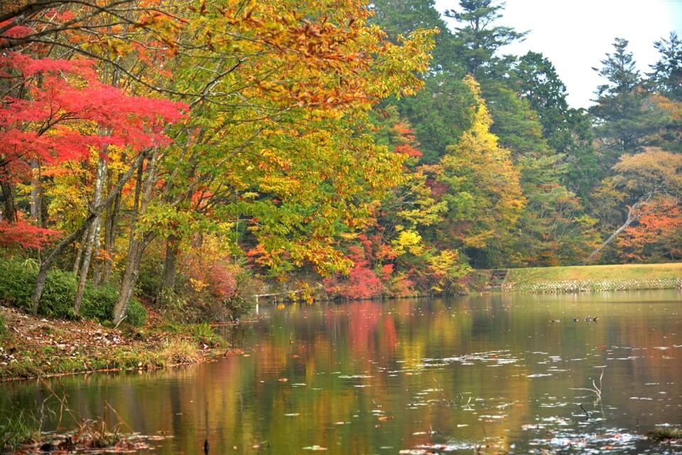 段戸湖紅葉写真