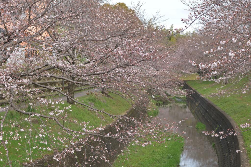 水瀬川緑道