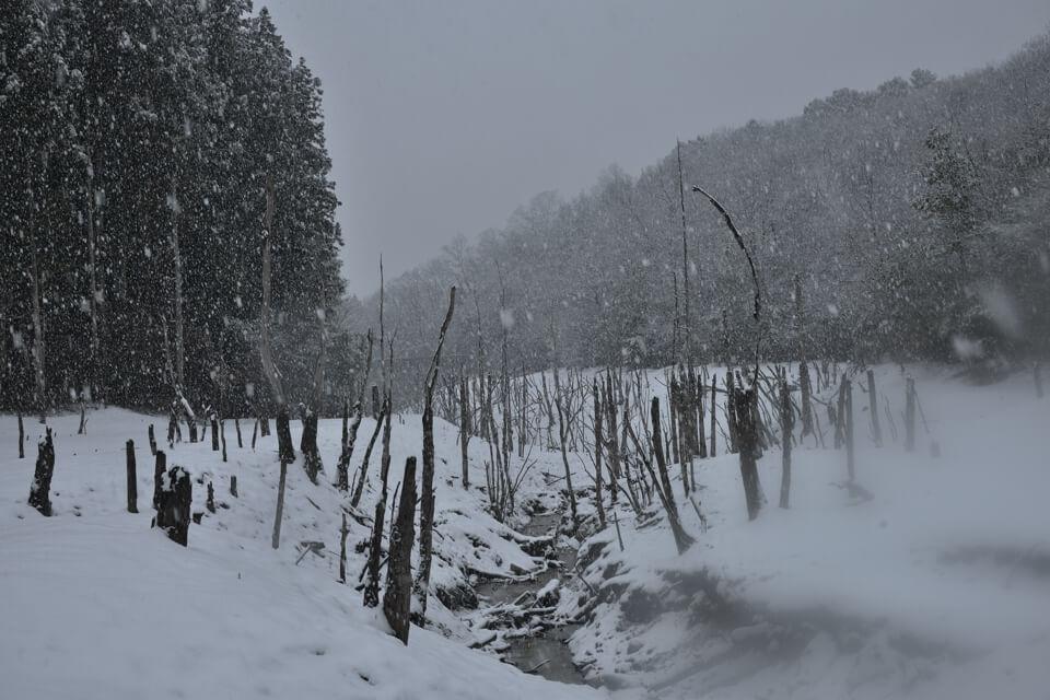 瀬戸大正池・海上の森の写真