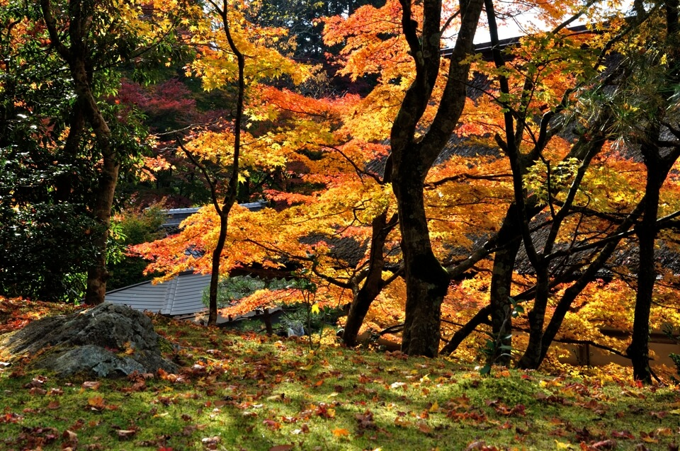 百済寺紅葉写真
