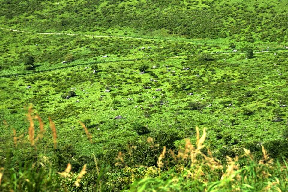 車山高原トレイル写真