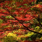 香嵐渓の紅葉写真