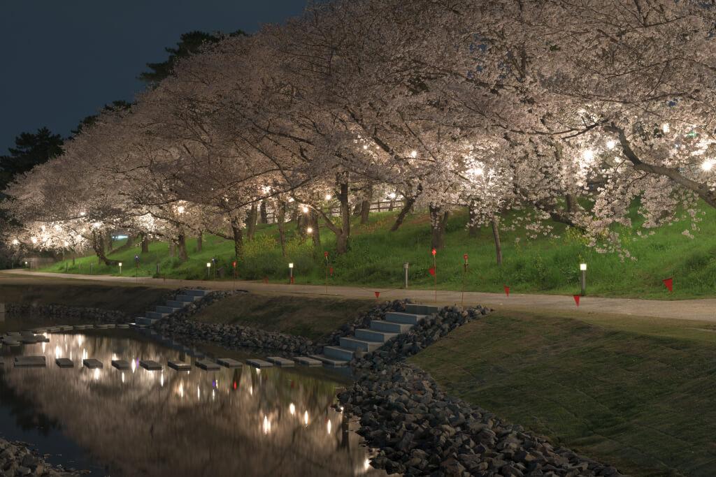 岡崎城公園の夜桜写真