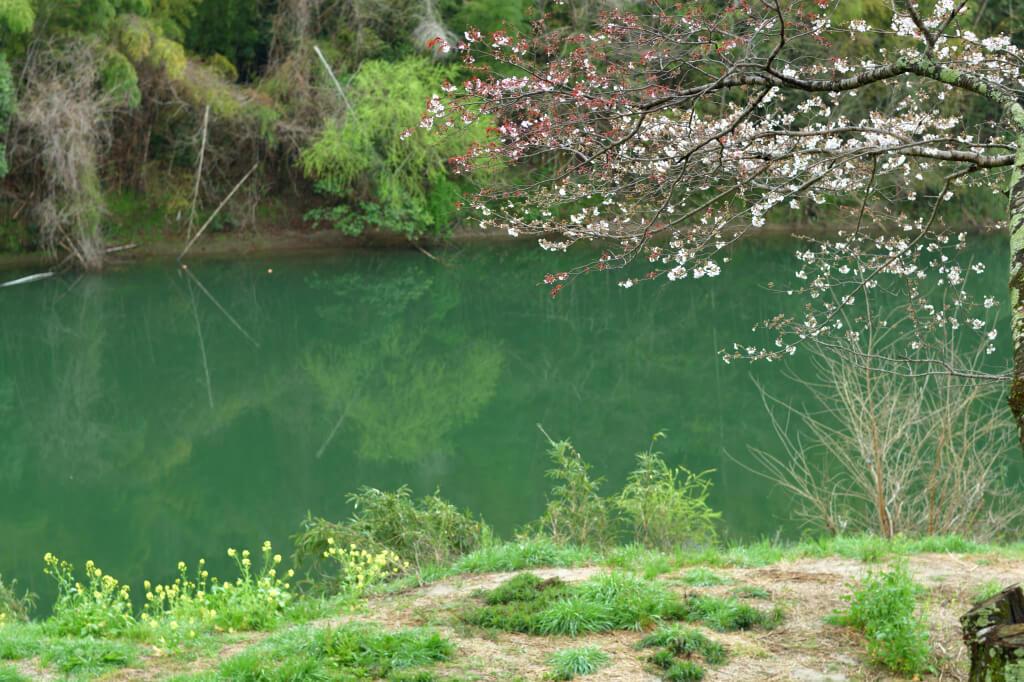 平戸橋公園の桜写真