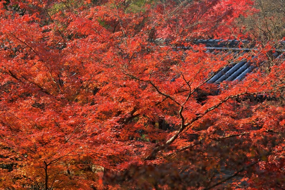 東福寺の紅葉写真