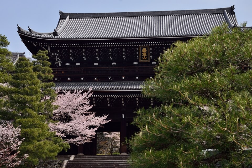 知恩院三門の桜写真