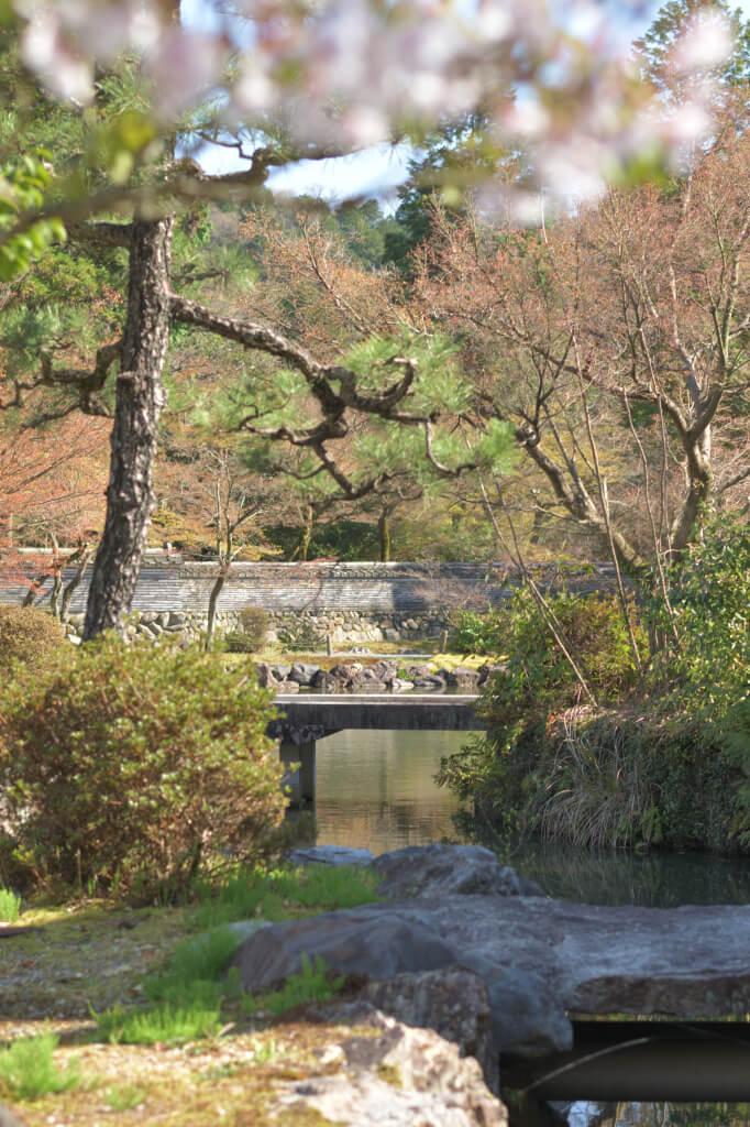 虎渓山永保寺の桜写真