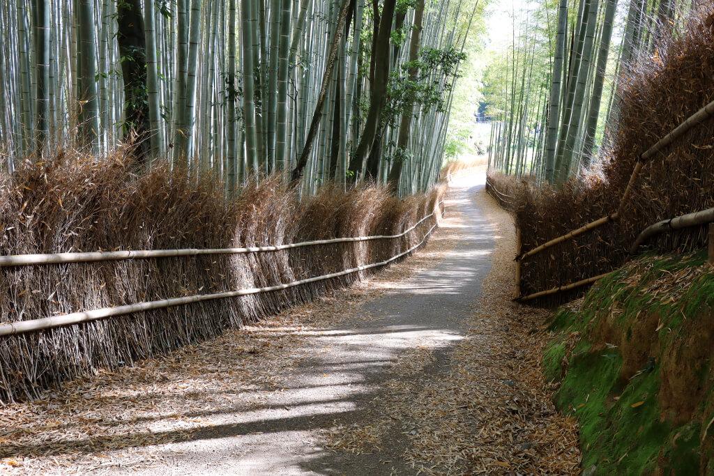 京都一周トレイルラン写真