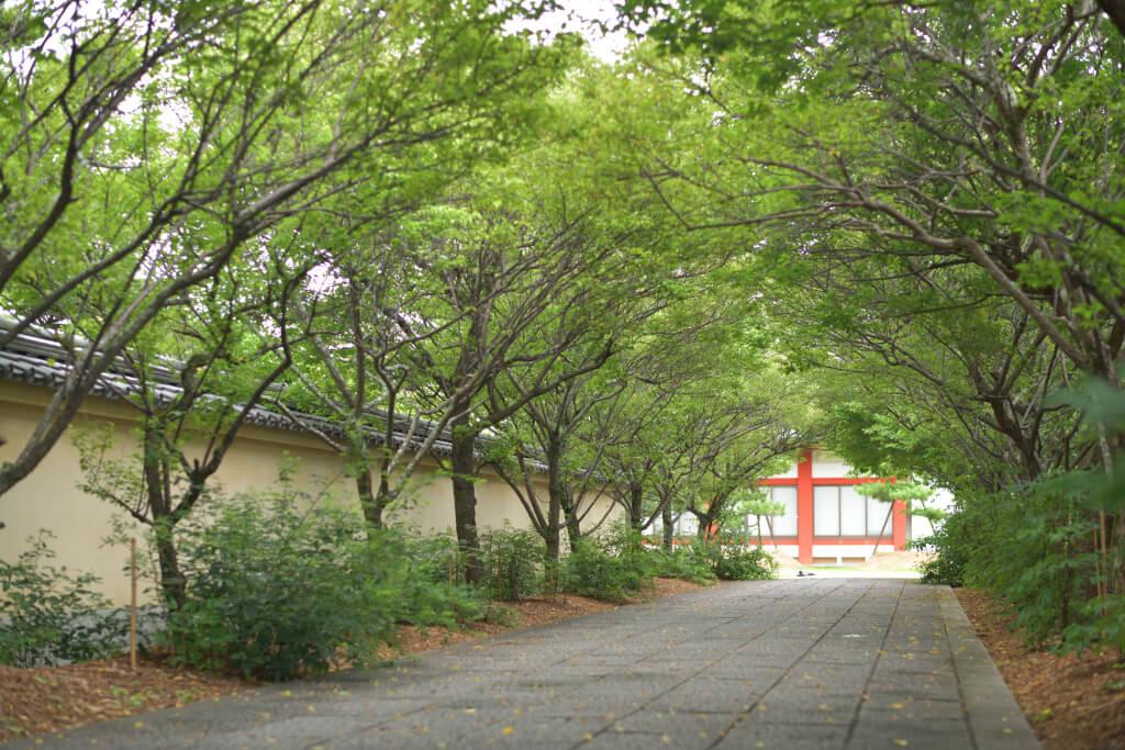 薬師寺の写真