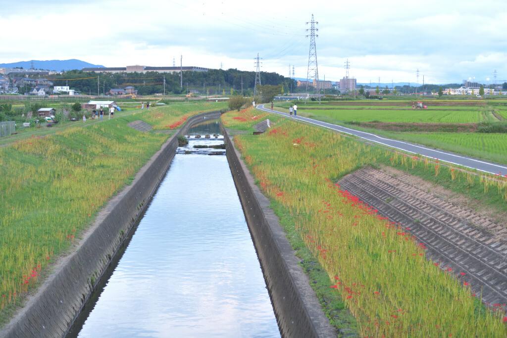 豊田市彼岸花の名所写真