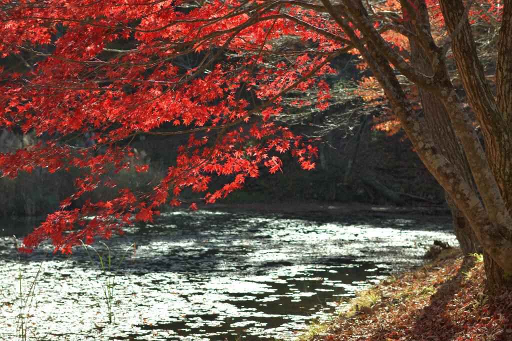 タカドヤ湿原の紅葉写真