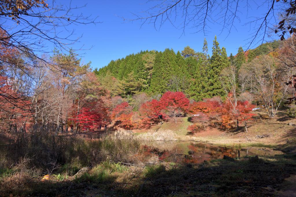 タカドヤ湿原紅葉写真